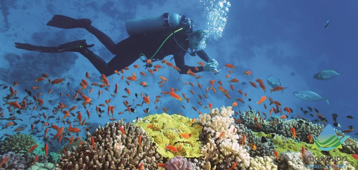 Marine Biology (MSc) - Courses